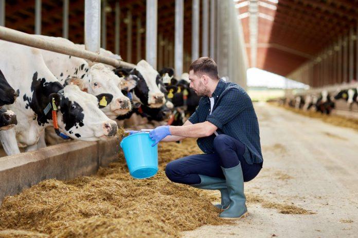 Hayvancılıkla Uğraşan Genç Bir Çiftçi
